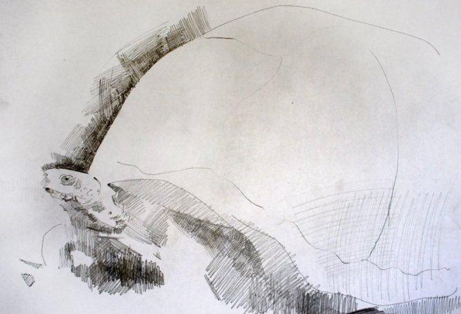 Μουτσολάρι Κέβιν - Γιώργος, 2014